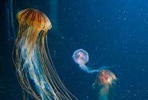 jumpin' jellyfish / jellyfishing! / by Kristin Damstetter