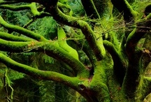 Magical Trees / Remarkable Trees
