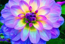 Flowers / by Bridgett Idell