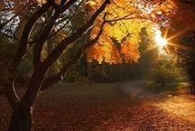amazing autumn / autumn / by Kristin Damstetter