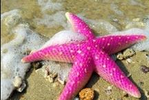 Seashore Shells & Starfish / Sea shells with fabulous colors. / by Joanne Lee
