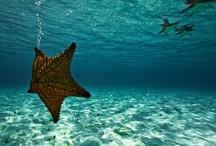 The Sea.. MAR -OCEANO / by Rosa Margarita