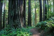 T R I P S : C  A  • R E D W O O D S / planning for my road trip to the california redwoods! / by Marlena Pearl