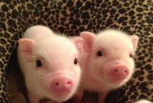 pure cuteness.