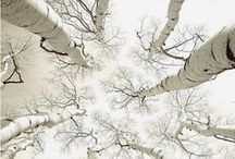 High on Trees / by Cecile Kirby