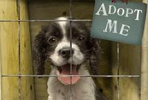 Adopt A Pet! / by Velda Roberts