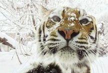 Animals / Animals and nature