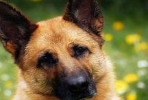 ♡  Dog Luxury – Lifestyle for Dogs and Dog Lovers ♡ / Dog Luxury – DER Hunde Concept Store   The Finest Selection of Dog Luxury   www.dogluxury.de