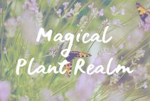 Magical Plant Realm / Magical Plant Realm | Labyrinths | Garden Inspiration | Plants