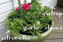 if i was a handy gardener.. / by Natasha Wiberg-Morency