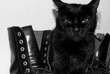 Oh My Goth! / by Melanie Chaffin