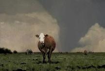 Weather Watch / by Trish Herzog