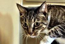 Here Kitty Kitty Kitty / by Trish Herzog