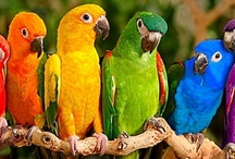 Friends with Feathers! / Beautiful Birds of all types!  I just LOVE them! / by Susan Wilder