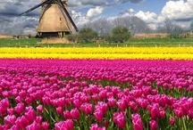 ~FLOWERS & PLANTS~ / Flowers & plants etc, I really like! / by Susan Wilder