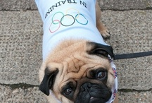 The Dogs of the London Olympics 2012 / by Dogsclub .TV