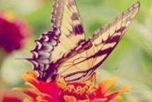Butterflies, Dragonflies~Beauty / by Susan Wilder