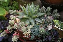 succulents / by Treat her like a Lady