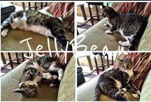 JellyBean / All things JellyBean...my feline companion. / by Trish Herzog