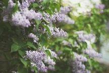 flora / by Abby Ytzen-Handel