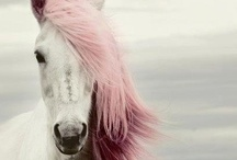 My magic horse / horses, ponies & unicorns. be mine.