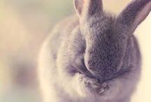 Bunny Love / by Jana Hien
