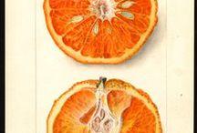 Botanical prints / botanical plates stole my heart.