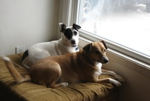 Lola and Chip :P :P / Whatever Lola Wants....Lola Gets,along with her little sister Chip! Doggy snacks, beds, toys, food...