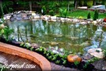 Koi Ponds and Water Gardens by Full Service Aquatics / Full Service Aquatics designs and installs beautiful works of art that people like to call ponds and water gardens!