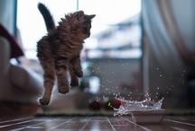 ♥ Cats ♥