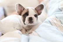 Pets Of Pinterest