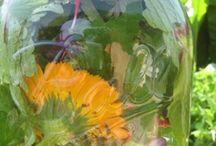 Apothecary : Herb & Plant Medicine / Benefits and properties of herbs and plants / by Ro Xana Star