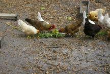 Farm House Living