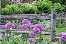 Ideas // garden