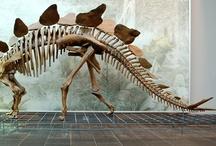Dinos, Fossils & Palaeontography / by Remi Kalisz