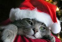 Christmas pets - kerst honden & katten / by Christmaholic.nl - kerst