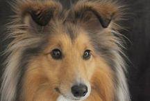 Koirat/Dogs