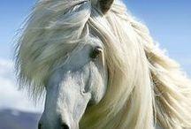 Hevoset/Horses