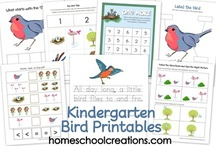 Bird, Audubon School Activities / Printable pages for studying birds, and Audubon for preschool and lower elementary students.