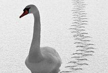 birds / Pinterestを始めてから気づいたこと、わたしは鳥の絵やモチーフがとても好きなのだ。