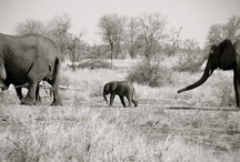 Elephant Love / by Sutton Lasater