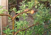 Fruit trees and bushes.