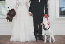Wedding Pups! / Our furry, 4-legged friends are just as an important piece of our lives as the 2-legged ones!  Here's some ways to have them as part of your special day!