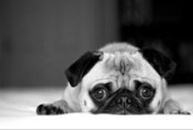 Il Resto del Carlino / In pug we trust