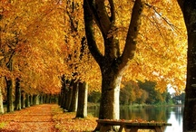 Fall / by Dawn Dunaj