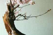 Bonsai / midget trees are the best trees / by Christina M Simmons