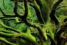 Green / by Afonso Boranga