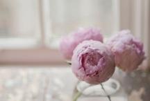 Flowers / by Dawn Dunaj