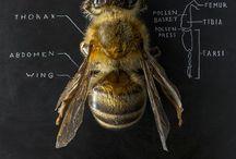Beekeeping / General beekeeping info