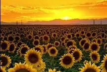 Favourite colour - Yellow